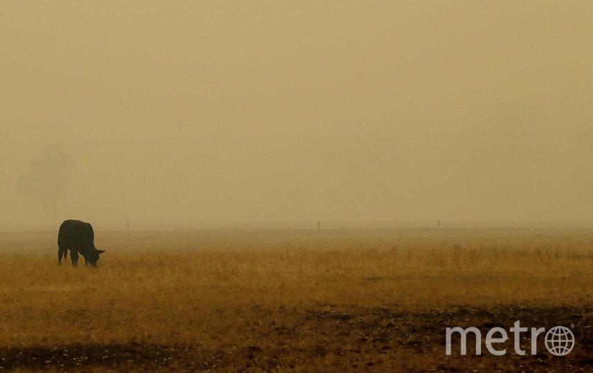 В Австралии продолжается борьба с масштабными пожарами. Фото Getty
