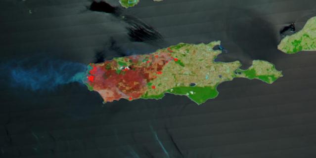 В результате лесных пожаров была сожжена одна треть территории острова Кенгуру.