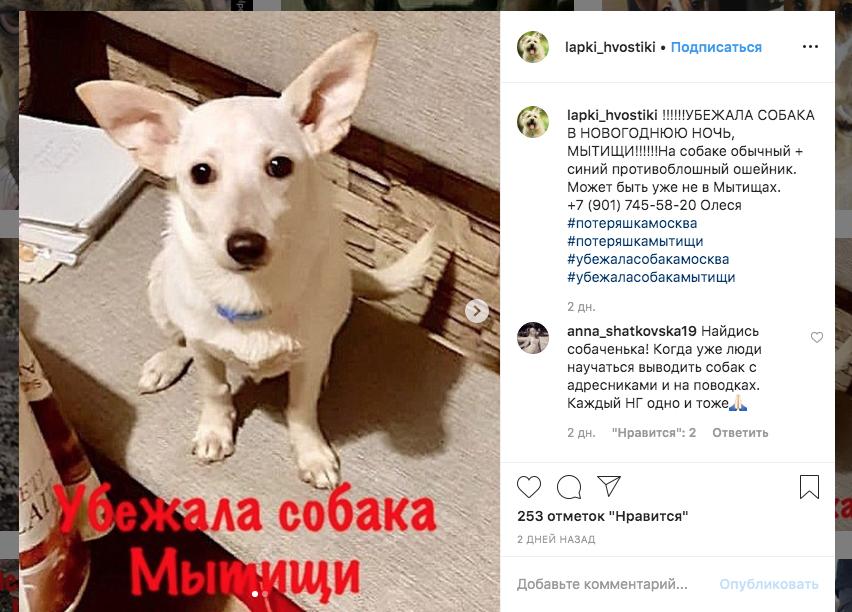 В Мытищах убежала собака в синем противоблошином ошейнике. Телефон 8(901)745-58-20. Фото скриншот объявления в Сети @lapki_hvostiki