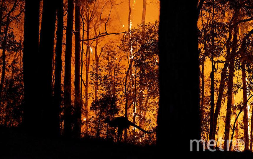 Австралия ежегодно страдает от пожаров, но в этот раз их сила возросла до небывалых размеров. Фото Getty