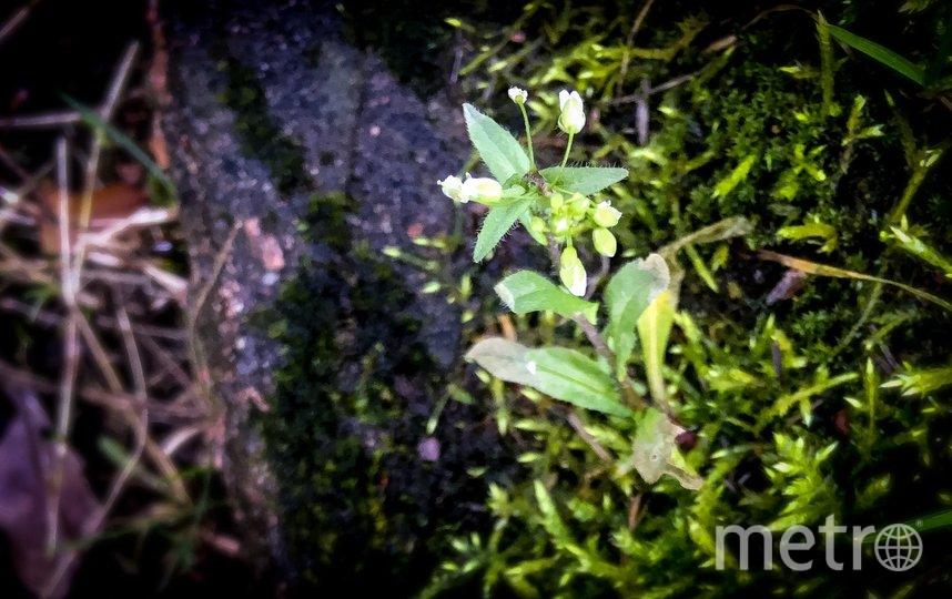 Из-за аномально тёплой погоды в городских парках распускаются листья, появились первоцветы и грибы, в лесах Ленобласти проснулись енотовидные собаки, а в водоёмах – лягушки. Фото Кирилл Харламов (facebook.com)