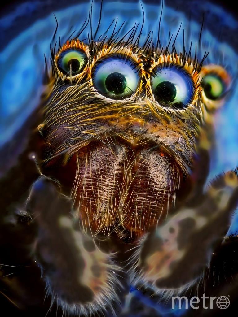 """""""Портрет паука-скакунчика"""". Фото Михаил Грибков, Предоставлено организаторами"""