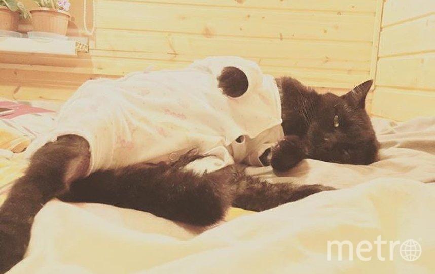 """Это котик моей подруги Полины, его зовут Сеня. Он не очень любит ходить в одежде, но в пижамке ему оказалось очень уютно! Фото Оксана, """"Metro"""""""