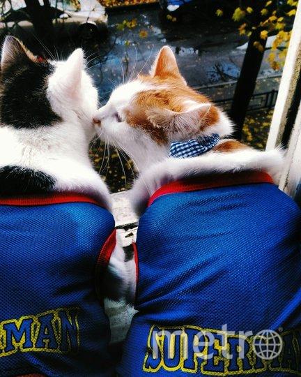"""Наших двух бандитов зовут Том и Тим, на фото они в костюмах супер-котиков. Фото Снижанна, """"Metro"""""""