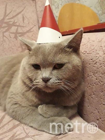"""У нашего кота Вилли очень свободолюбивый характер, поэтому нарядить его очень сложно! Но на Новый год традиционный колпачок обязателен! Фото Елена, """"Metro"""""""