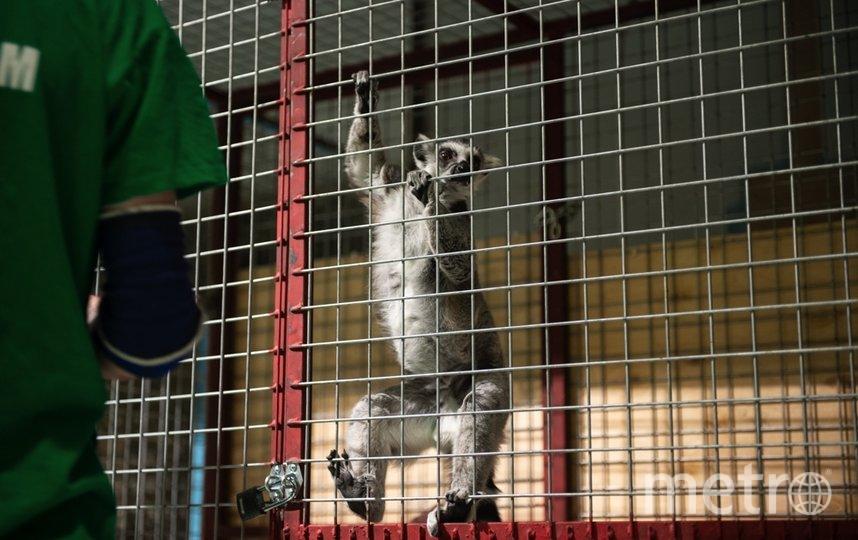 """Здесь содержатся животные, рождённые в неволе, и, говорят сотрудники, живут дольше, чем в дикой природе. Фото Святослав Акимов, """"Metro"""""""