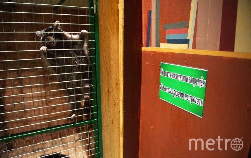 """Животные в бывших контактных зоопарках всё равно вызывают чувство острой жалости – как правило, содержат их в очень стеснённых условиях. Фото Святослав Акимов, """"Metro"""""""