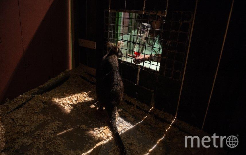 """Местный карликовый кенгуру может перепрыгивать через бортик, но и тогда трогать его строго запрещено. Фото Святослав Акимов, """"Metro"""""""