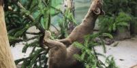 Животные в зоопарке пришли в восторг от непроданных ёлок