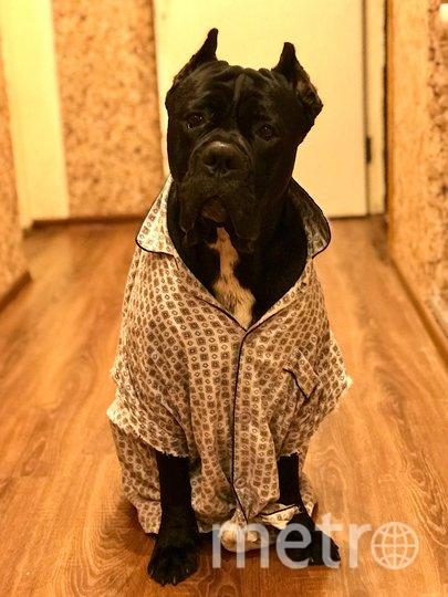 """Это Жордж, для своих Жора!) У него как и у всех членов семьи есть своя пижама. Фото Алёна Андреева, """"Metro"""""""