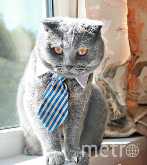 "Тимбу 3,5 года и он настоящий джентльмен. Фото Анна Котова, ""Metro"""