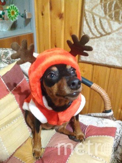 """Боня на Новый Год со всей ответственностью справлялась с ролью оленя! Фото Александр, """"Metro"""""""