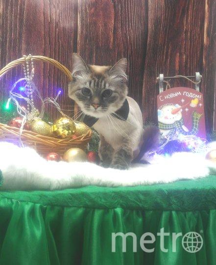 """Кошка Мура в галстуке-бабочке для парадных выходов. Фото Бурцев С.И., """"Metro"""""""