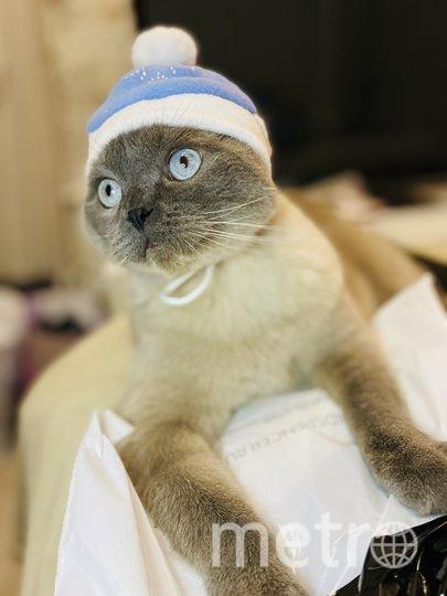 """Кот Пончик в Новый год тоже был самым модным. Фото Алина Данилина, """"Metro"""""""