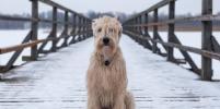 Столичные спасатели вытащили из ледяной воды собаку