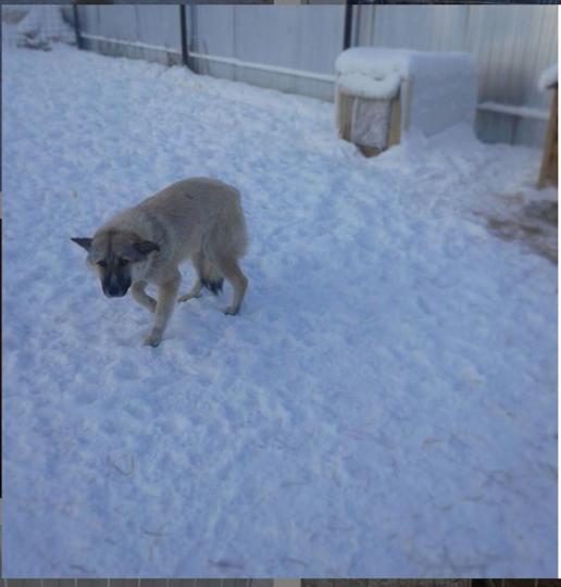 Большинство бездомных собак были когда-то домашними. Фото скриншот instagram.com/punktperederzhkiyakutsk/