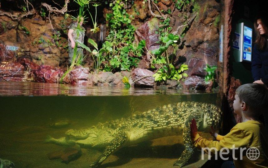 """13 лет крокодилу Нилушке. 10 из них он прожил на карантине. Фото Алена Бобрович, """"Metro"""""""
