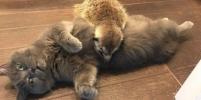 Сурикат и кот, живущие у петербурженки, стали настоящими героями Сети