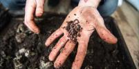 Пункт переработки органического мусора открыт в Петербурге: черви едят очистки и заварку