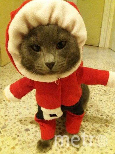 """""""Исполняю все желания!"""" - кот Дымок. Валерия. Фото """"Metro"""""""