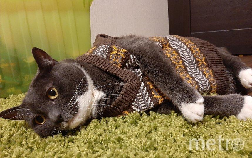 """Хочу похвастаться самым обаятельным котиком в очаровательной связанной жилетке. Наш кот Марсель, любит донашивать вещи за старшим братиком ( за моим сыном). Фото Виктория, """"Metro"""""""