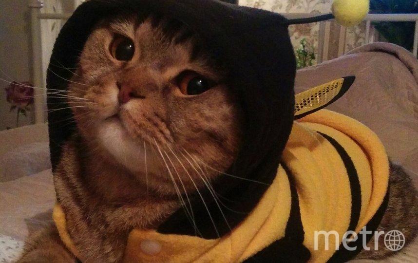 """Мария, кот Персик. Фото """"Metro"""""""