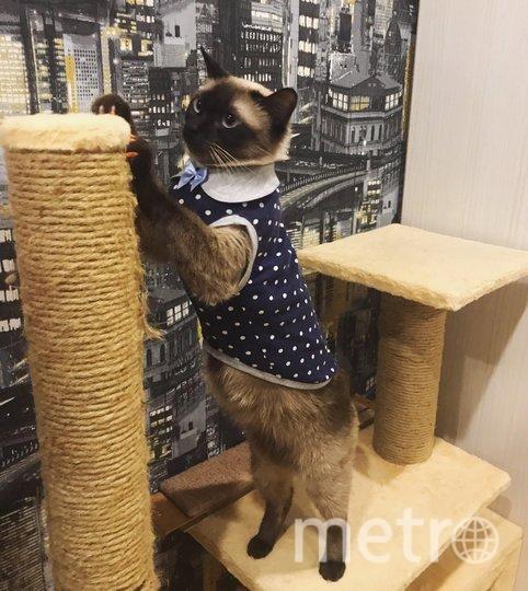 """У нашей Таси - целый гардероб! Самая любимая вещь - маечка «Тиффани» в горошек! Есть ещё «пижамные» майки, галстуки и свитера - Тася любит наряжаться :) Анна. Фото """"Metro"""""""