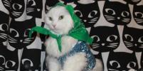 Нарядные коты покоряют Петербург: фото