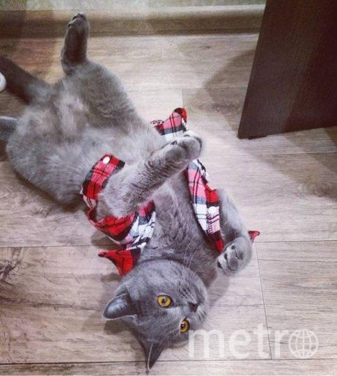 """Кошечка Пушинка, совсем не любит одеваться. Юлия. Фото """"Metro"""""""