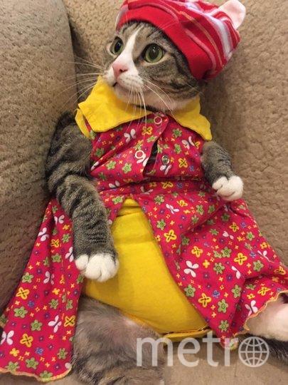 """Киса Мелисса-Отчаянная домохозяйка. Хозяин- Александр. Фото """"Metro"""""""