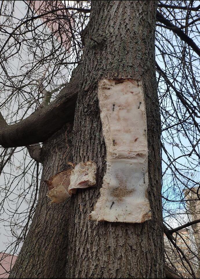 На Большой Очаковской улице к дереву прибили два куска сала. Фото Telegram-канал Москва | Live