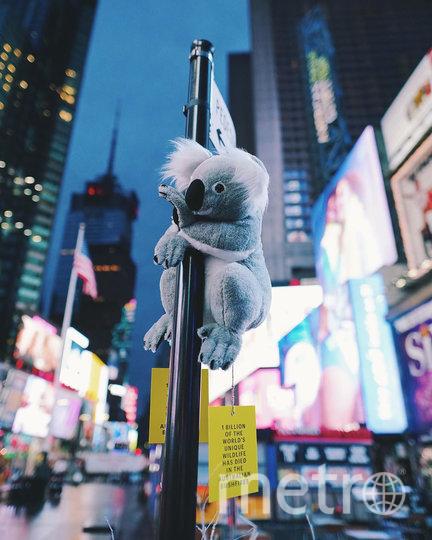 Проект также направлен на повышение осведомлённости людей, живущих в Нью-Йорке и Лондоне. Фото скриншот @koalasofnyc