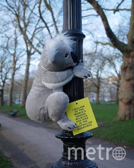 Десятки маленьких плюшевых коал недавно появились на улицах Лондона. Фото скриншот @koalasofnyc