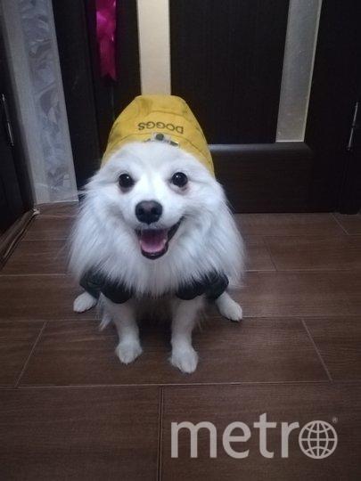 """Привет, я Бредли и я самый модный и веселый пёс!)) Моя хозяйка Марина. Фото """"Metro"""""""