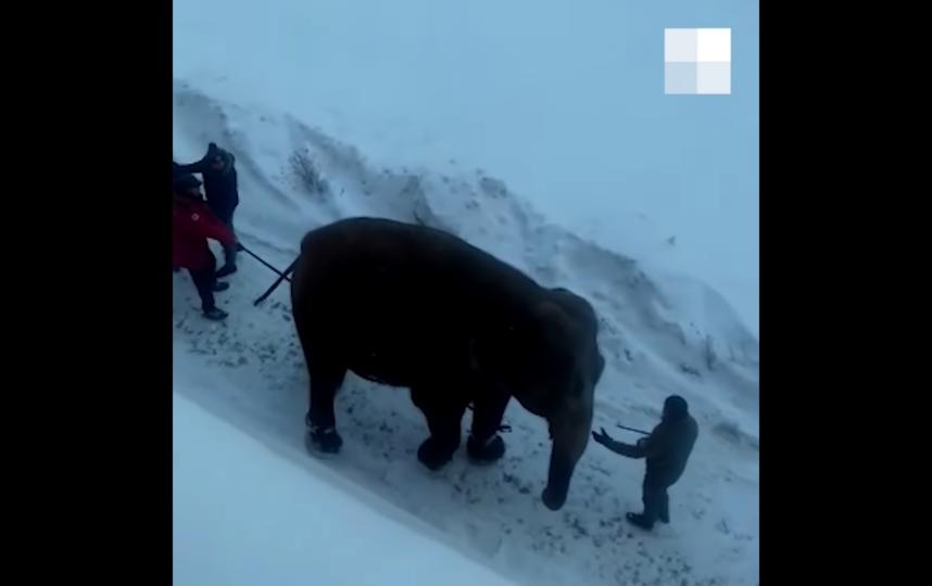Слонов благополучно вернули в цирк. Фото скрин-шот, Скриншот Youtube