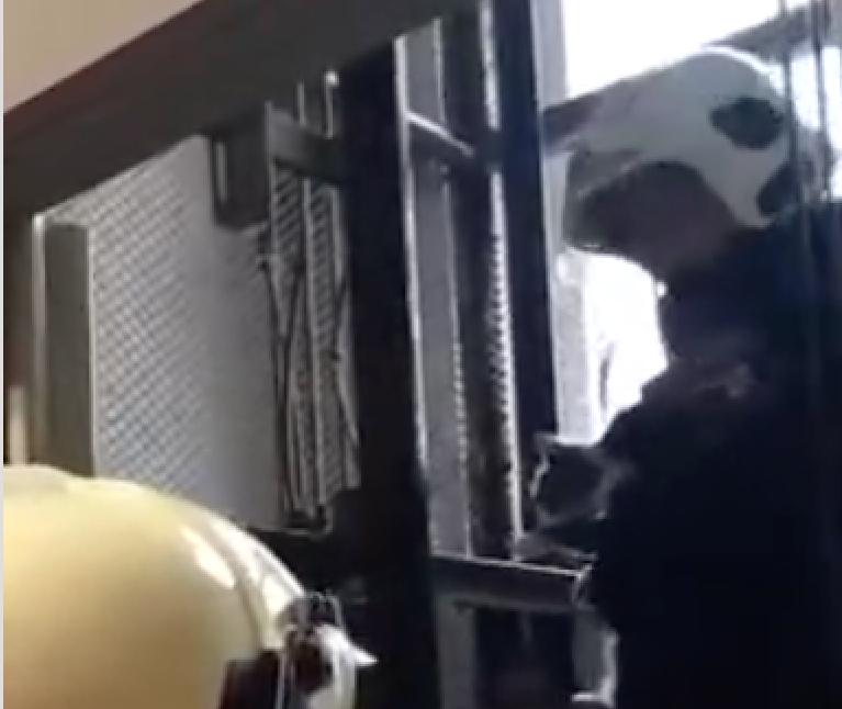 В Москве спасли кошку, которая четверо суток провела в шахте лифта. Фото скриншот видео youtube.com/watch?v=fnKyBAO3KLs