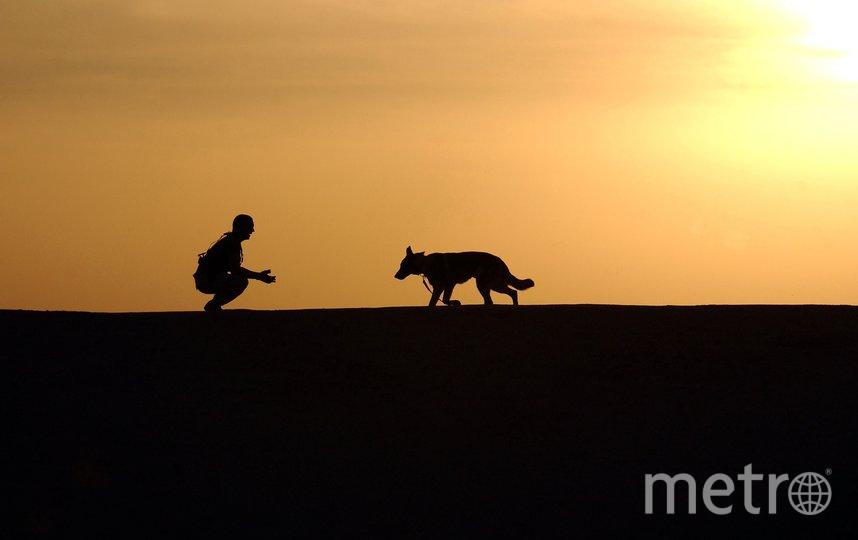 """В Пулково застрелили собаку. Фото pixabay.com, """"Metro"""""""