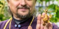 Гигантских жуков, личинок, манго и карамболу можно увидеть в петербургском храме