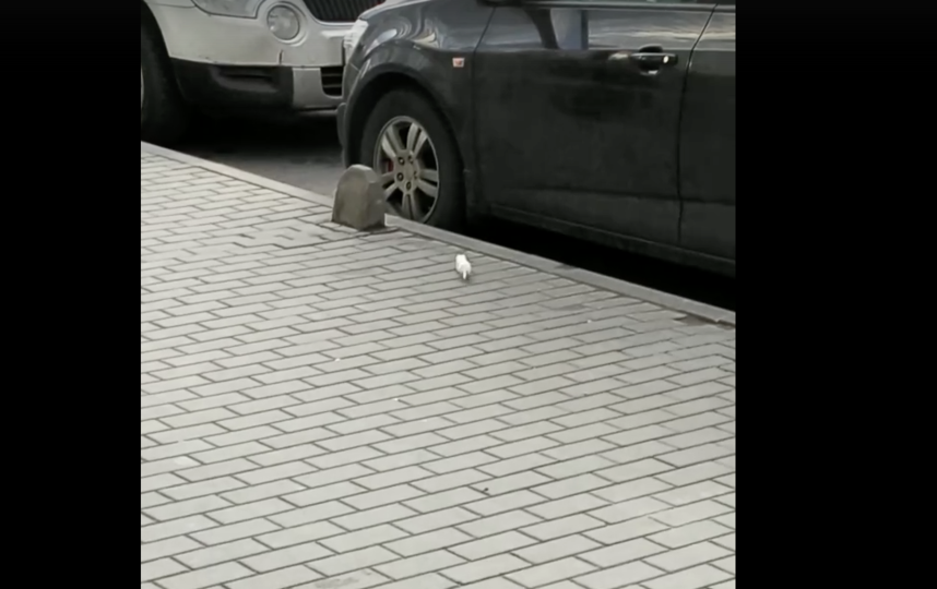 "Скриншот видео ""Комендантский проспект"". Фото vk.com/komenda_spb, vk.com"