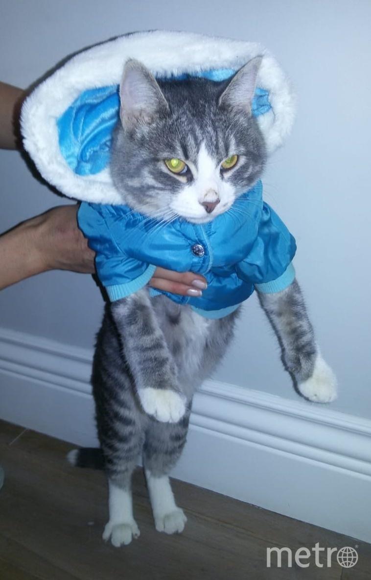 """Кот Зефир к одёжкам не привык, поэтому такой сердитый. Фото Оксана Долгова, """"Metro"""""""