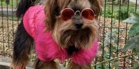 Столичные собаки и кошки восхищают модными