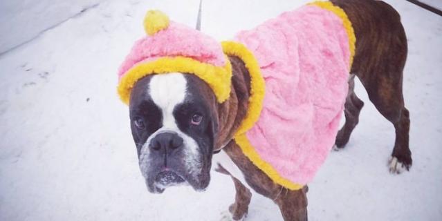 Аксор на Новый год временно исполнял обязанности снегурочки.