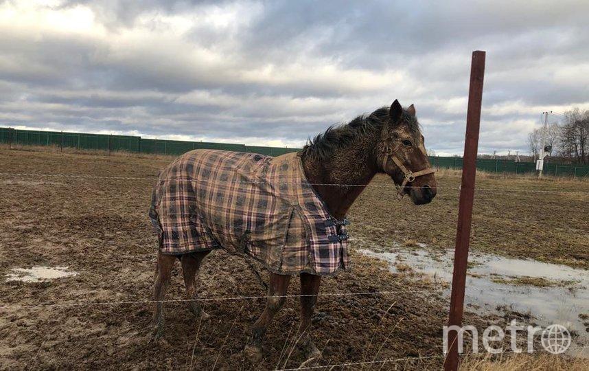 """К зиме утеплились даже лошади. Фото Е.Париева, """"Metro"""""""