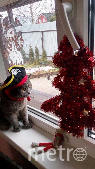 """Ватсон в новогоднем наряде пирата. Фото Елена Усова, """"Metro"""""""