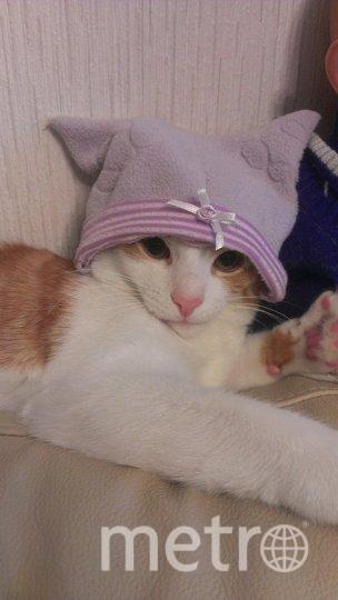 "Персик носит всё только от ""Gucci"". Фото Елена Осипова, ""Metro"""