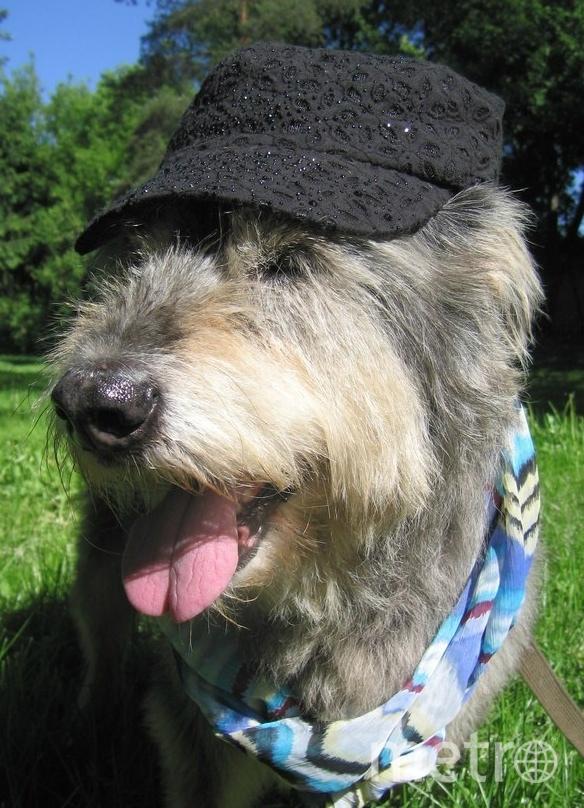 """Собакобабушка Кейси желает всем здоровья и долгих лет! Фото  Оксана Алексеевна, """"Metro"""""""