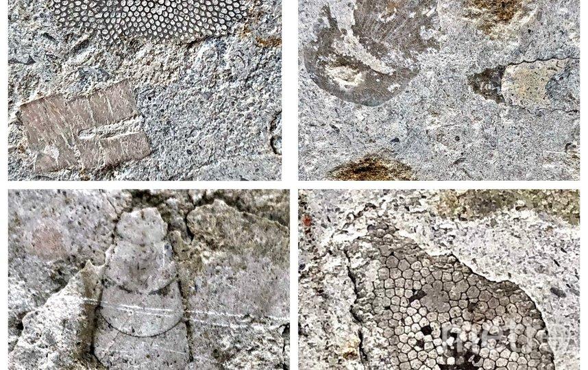 Находки палеонтологов. Фото club129417167, vk.com