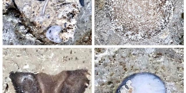 Находки палеонтологов.