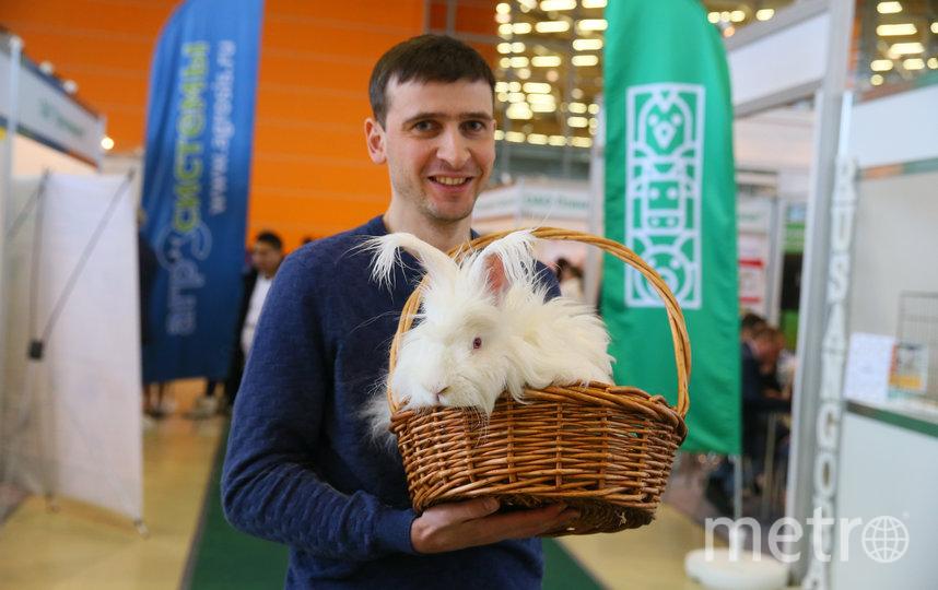 Кролику Гансу остригли локоны. Фото Василий Кузьмичёнок