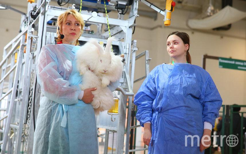 Кролики-гиганты умилили публику. Фото Василий Кузьмичёнок
